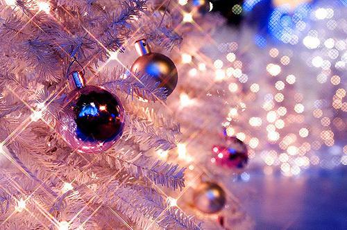 Beleza-christmas-christmas-lights-christmas-tree-frost-Favim.com-119624_large
